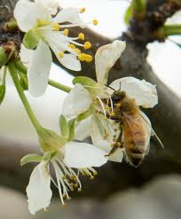 plants native to utah want to attract bees plant flowers avoid pesticides experts say