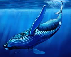 Challenge Harmful What Is The Blue Whale Challenge And Why Is It Harmful For