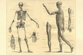 Human Body Anatomy Pics Parts Of The Body French Expressions
