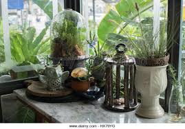 glass terrarium stock photos u0026 glass terrarium stock images alamy