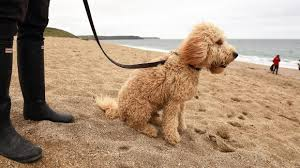 Dog Friendly Cottages Lake District by Dog Friendly Holiday Cottages National Trust