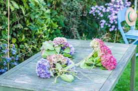 dried hydrangeas how to and preserve hydrangea flowers