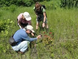 blog carya ecological services llc environmental consulting