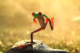 frog magic and folklore