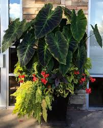 Tropical Potted Plants Outdoor - 287 best containers shade images on pinterest container plants