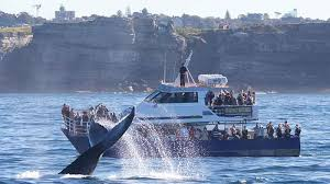 sydney harbour cruises whale and sydney harbour cruise departs harbour