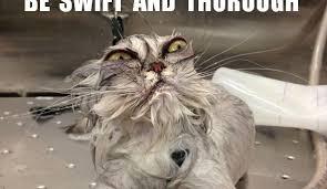 Funny Kitten Memes - pet humor