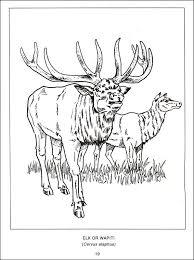 wildlife canada coloring book 017748 details rainbow