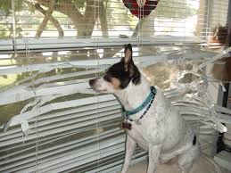 Home Design Story Dog Bone by How To Keep Dogs From Destroying Blinds The Finishing Touch