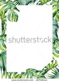 monstera leaf stock images royalty free images u0026 vectors