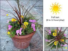 Summer Container Garden Ideas Fernlea Flowers Ltd Container Garden Recipe 1