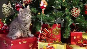 british female cat sits near decorated christmas tree with gifts