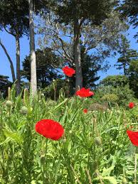 Family Garden Sf Top Ten Best Free Activities With Kids In San Francisco