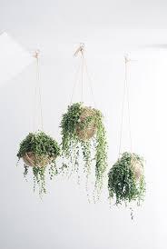 Indoor Hanging Garden Ideas Terrace And Garden Indoor String Garden Plan 20 Beautiful