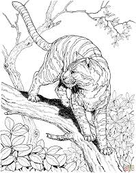 tiger in a jungle coloring page free printable coloring pages