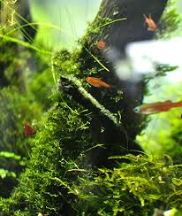 Aquascape Malaysia Natural Aquatic World Tropical Fish Aquariums And Aquascaping Shop