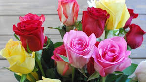 different color roses what is the meaning of different colors reference