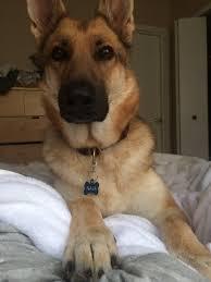 on sensitive dogs u2013 nala the wonder dog