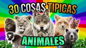 imagenes de animales y cosas 30 cosas típicas de mascotas y animales youtube