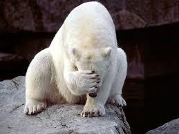 Hairless Bear Meme - meme template search imgflip