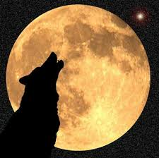 by the light of january s wolf moon ecology global