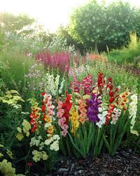 potted gladiolus will have to try this gardening ideas