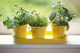 Indoor Spice Garden by Herb Gardening Getting Started