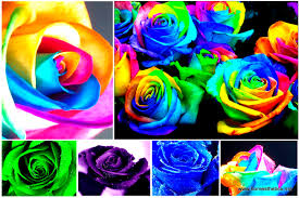 learn how to make simple colored and rainbow roses