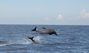 playground of dolphins u0026 whales u2013 terra explorare