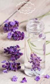 martini lavender 1101 best lavandula angustifolia images on pinterest lavender