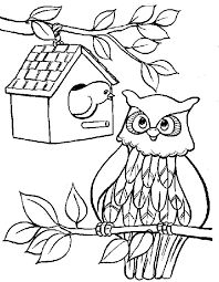 great coloring pages owls gallery kids ideas 6568 unknown
