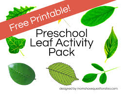 leaf activities moms have questions too