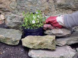 make a shady rock garden hgtv