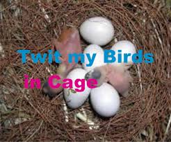 the ultimate most beautiful birds eggs hatching national