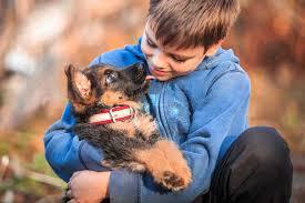 commercial dog food dangers u2013 german shepherd country