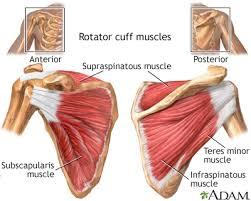 Human Shoulder Diagram Anatomy Of Swimmers U0027 Shoulder And Impingement Sea Hiker