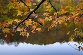 ontario parks sharing tips fall colours algonquin park