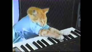Cat Playing Piano Meme - keyboard cat birthday song youtube
