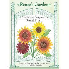 renee s garden royal flush ornamental sunflower seeds