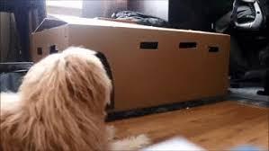 afghan hound gif cat gifs find u0026 share on giphy