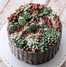 succulent cakes by ivenoven will make every succulent lover u0027s