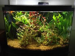 Live Plants In Community Aquariums by Complete Betta Care Guide U2013 Thefishwish