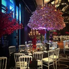 blossom trees 5m pink cherry blossom trees harbourside decorators