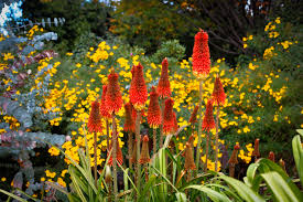 Botanical Garden Definition by Royal Botanic Gardens Melbourne Botanic Garden In Melbourne