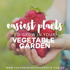 easiest plants to grow in your vegetable garden the organised