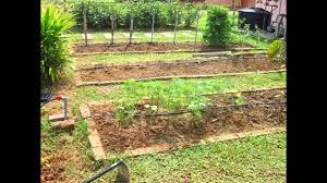 Small Backyard Vegetable Garden by Vegetable Garden Design Backyard Vegetable Garden Design Ideas