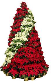 poinsettia tree christmas the poinsettia tree fixture