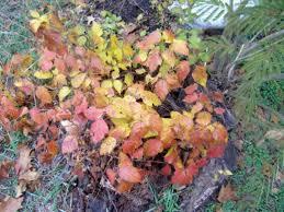 poison oak ivy sumac plants itch owlcation