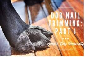 dog nail trims part 1 get to know your dog u0027s nails smart dog