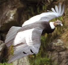 Tambo Lateral File Endo Reserva Ecológica Antisana Sistema Nacional De áreas Protegidas